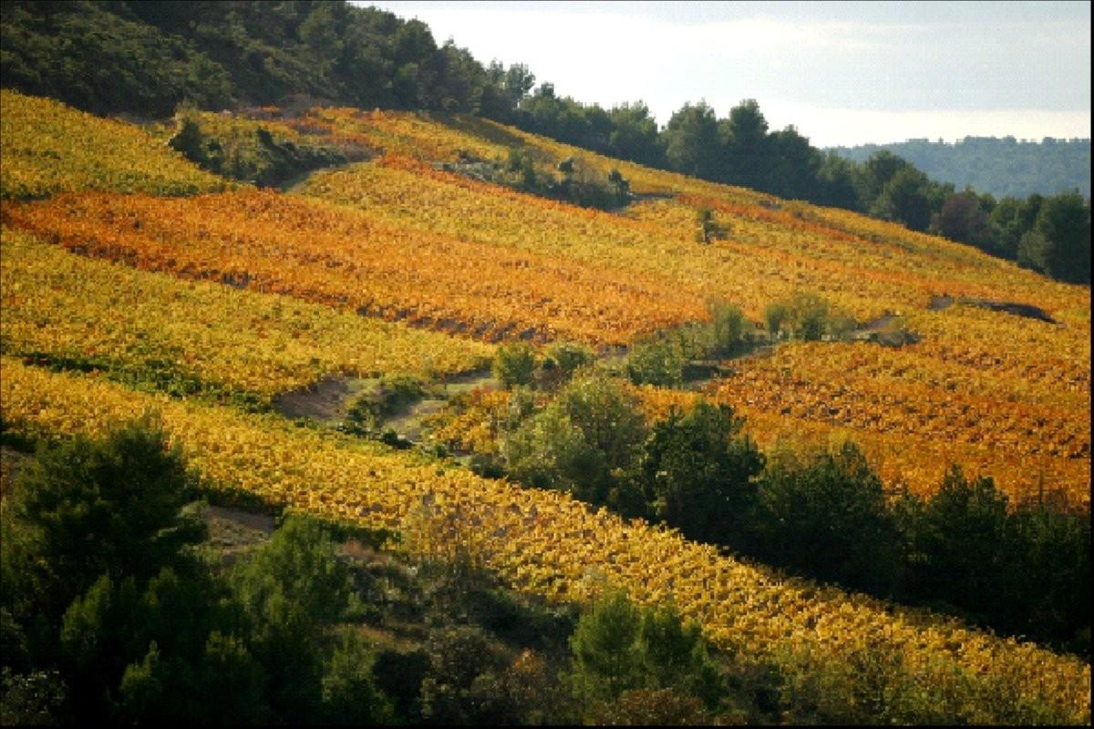 Vignoble Domaine des Terres FALMET  à l'automne